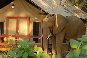 Lugenda Wilderness Camp Elephant