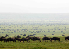 Garongosa National Park